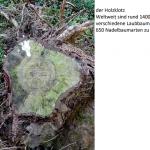 vykreslený obrázek z pařezu stromu
